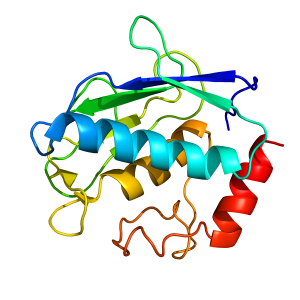 mmp12_cat | recombinant proteins offer