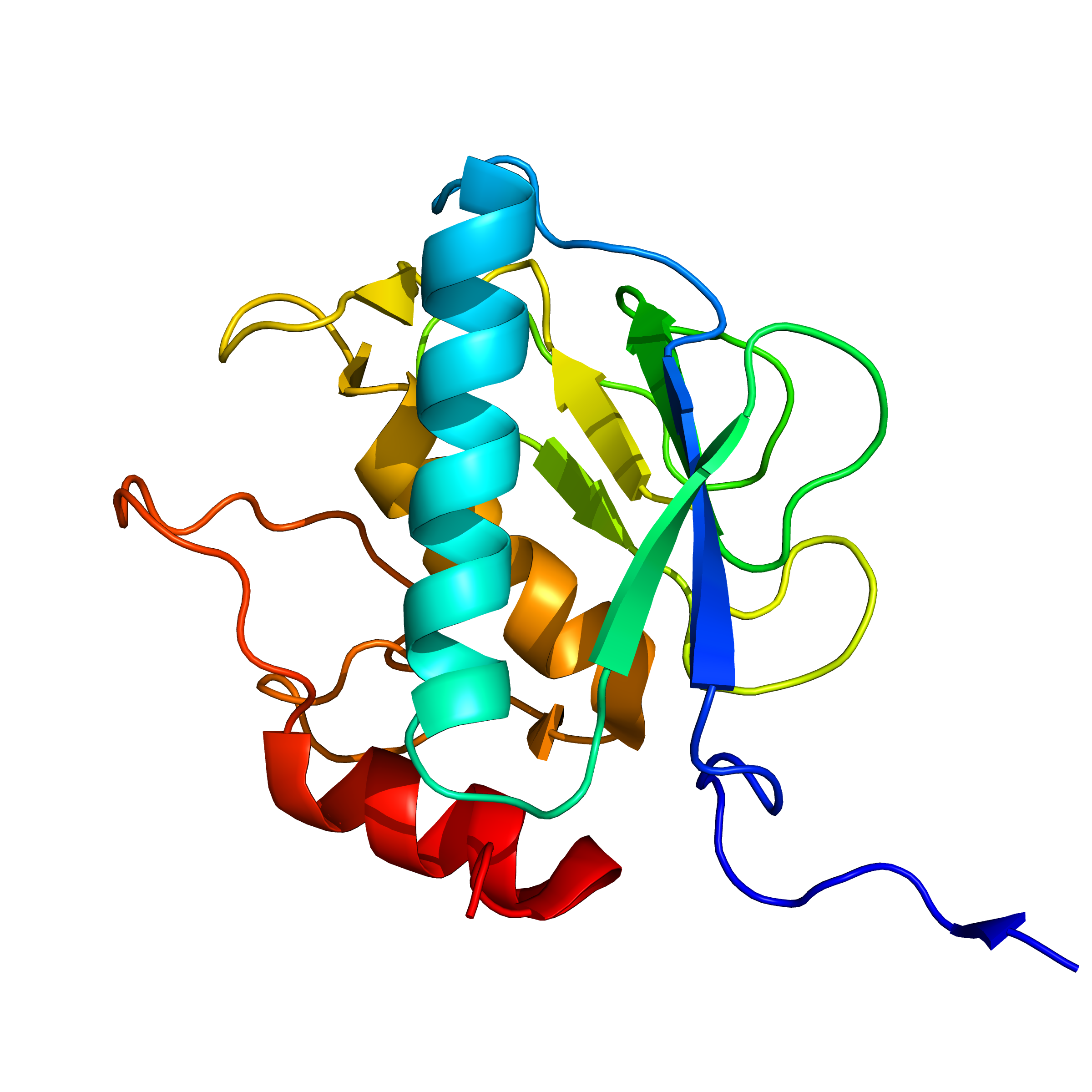 mmp13 | recombinant proteins offer