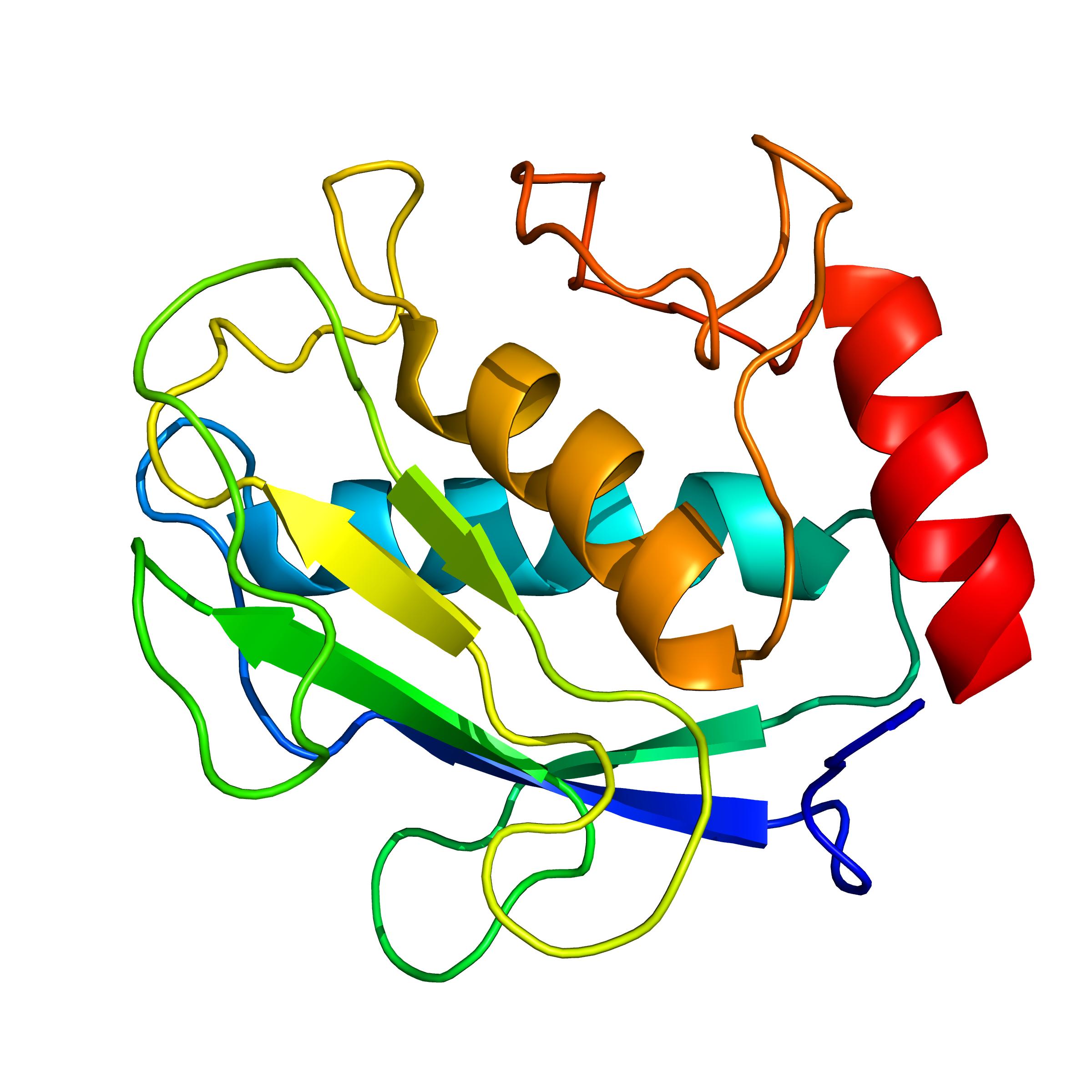 mmp8 | protein custum service Giotto biotech