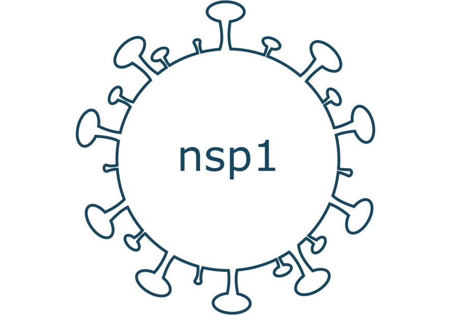 nsp1 protein sars-cov-2