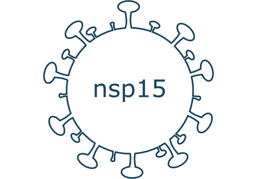 nsp15 protein sars-cov-2