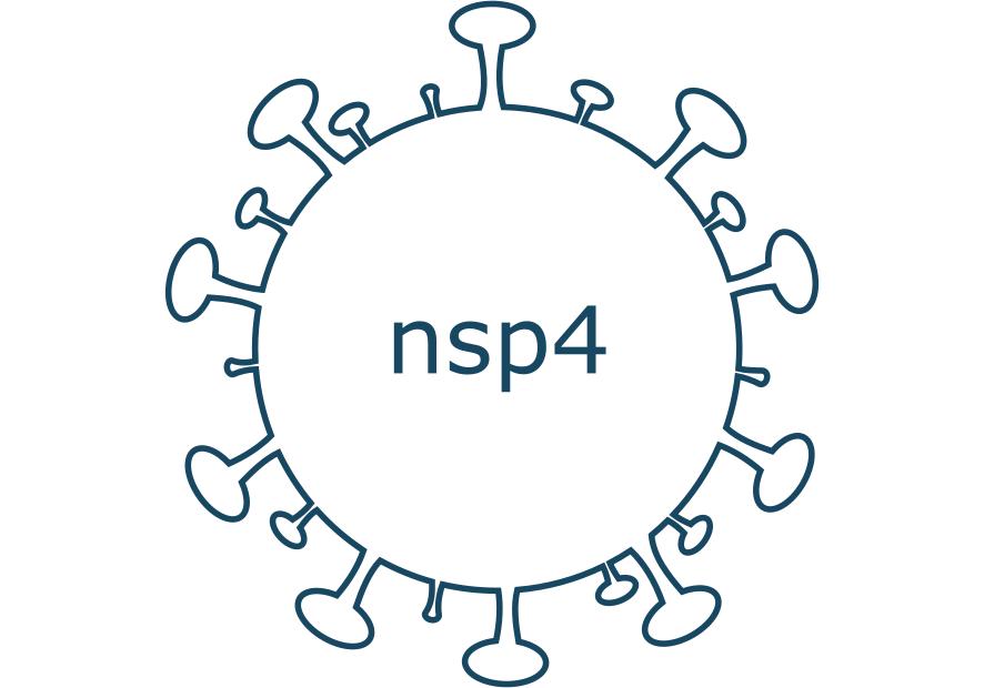 nsp4 protein sars-cov-2